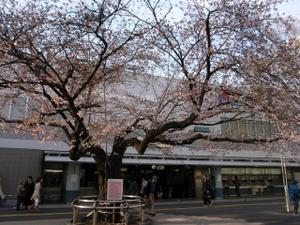 Sakura090331_1_2
